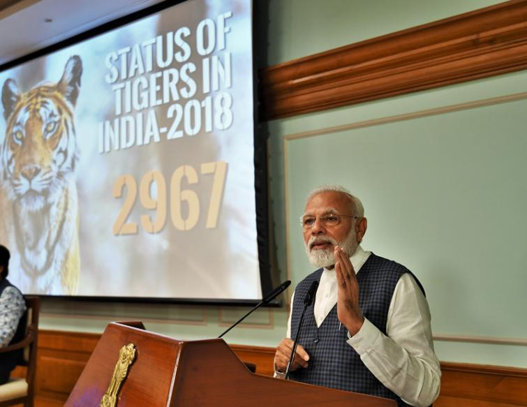 Count of Tigers in India rises to 2967; PM Narendra Modi describes this as a historic achievement