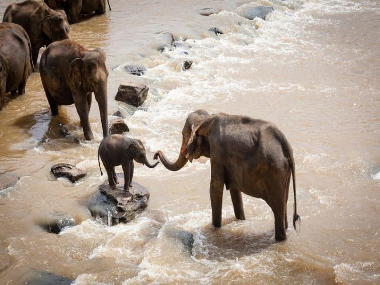 K'taka Forest dept to install fox lights to end human-elephant conflict