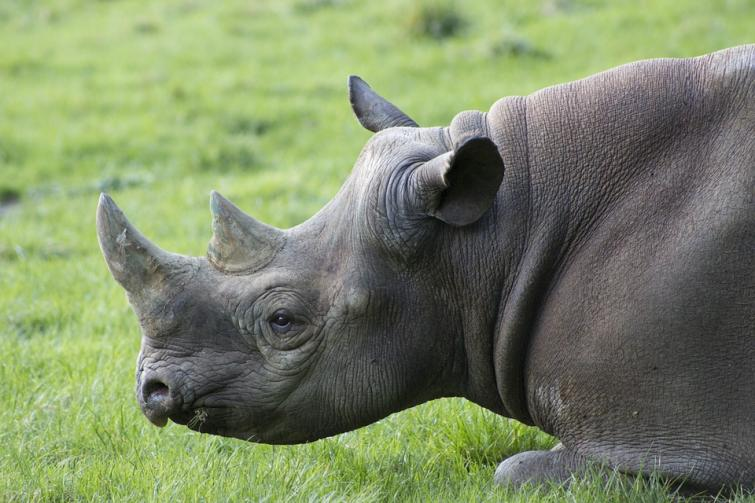 Javan Rhino increases to 72 in latest count
