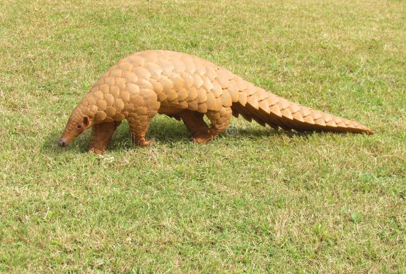 Pangolin rescued from poachers, 5.65 kg scales seized