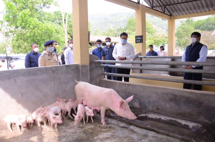 Assam CM directs state Veterinary and Forest department to work with ICAR to deal with African Swine Fever