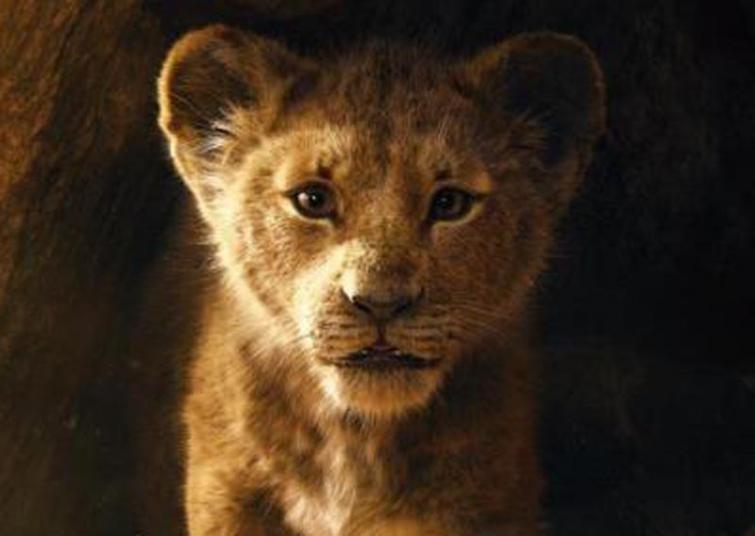Gujarat: Lion found dead in sanctuary area of east Gir forest