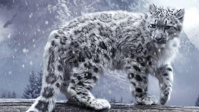 Man arrested for poaching endangered snow leopards in Mongolia