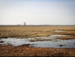 Blueprint launched to manage Earth's fragile peatland carbon sinks