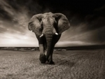 Odisha: Wild elephant tramples four to death