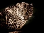 Hyderabad: Leopard spotted on outskirts of city, still untraced