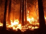 Wildfires engulfs 1,65,000 hectares of forestland in Russia