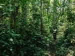 Turn around deforestation in 2020, the 'Nature Super Year', says Guterres