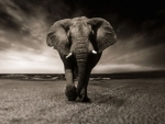 Mysuru: Zoo employee killed by elephant