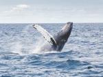 Sri Lanka rescues over 100 whales stranded ashore
