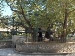 'Tree Authorities' for JMC, SMC constituted in J&K