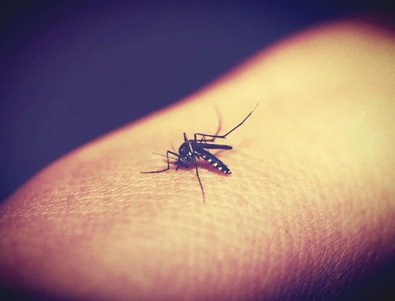 Russian public health watchdog warns about risk of dengue fever in Singapore