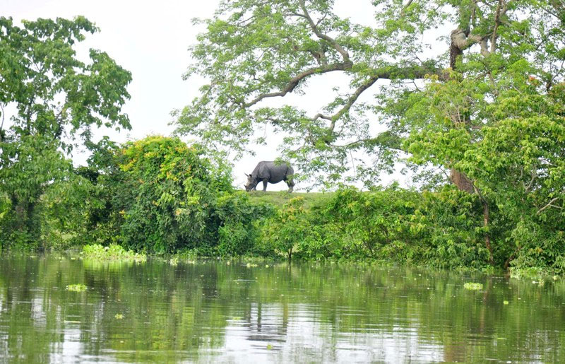Drones, quick response vehicle enlisted to rein in man-animal conflict in Assam