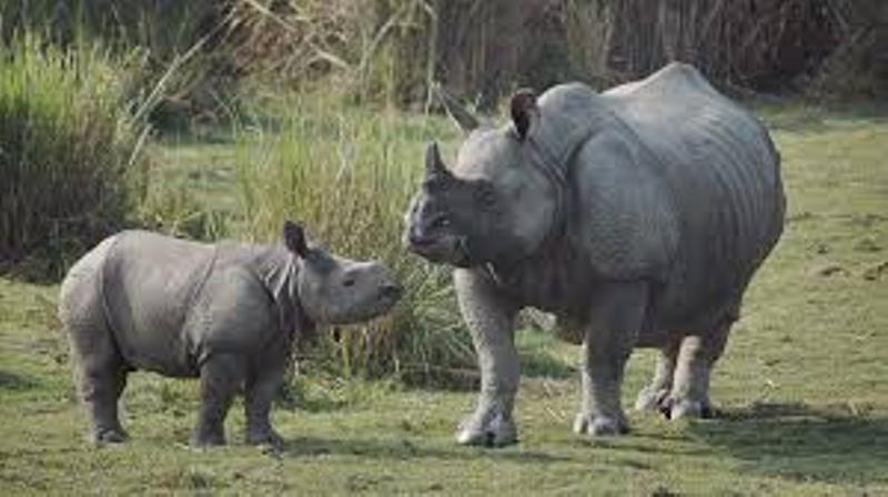 Assam: Three additions to Kaziranga National Park approved