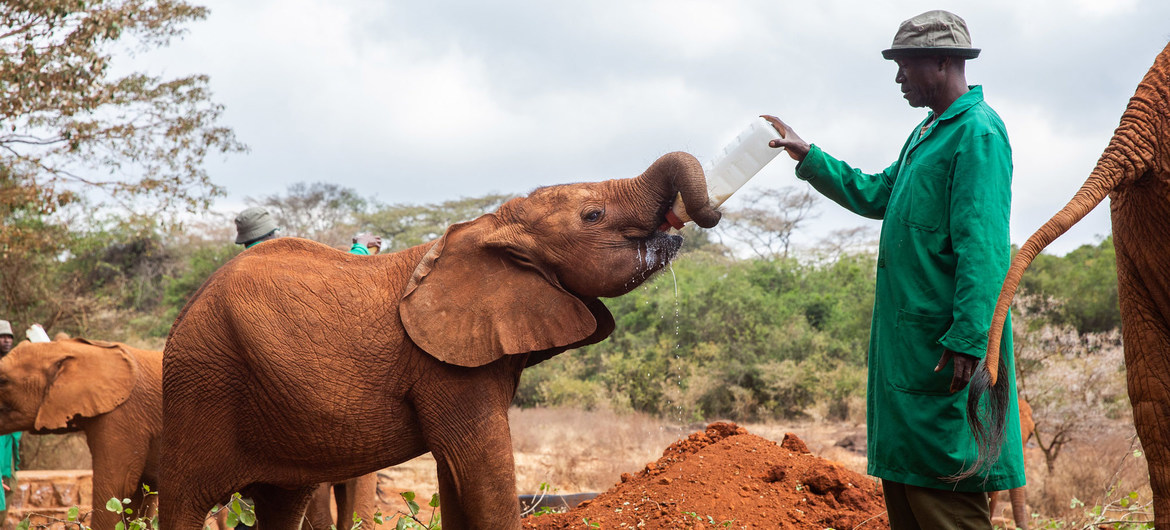 Wildlife crime putting environment and health at risk: UN report