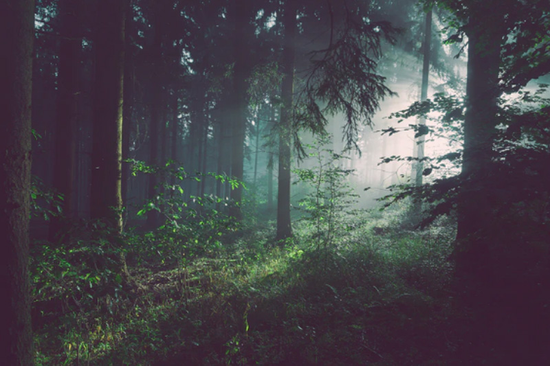 J&K: Govt. constitutes panels to implement Forest Rights Act