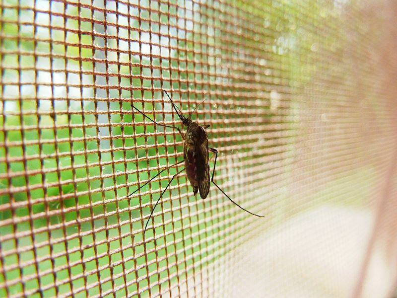 First in India malarial parasite 'plasmodium ovale ...