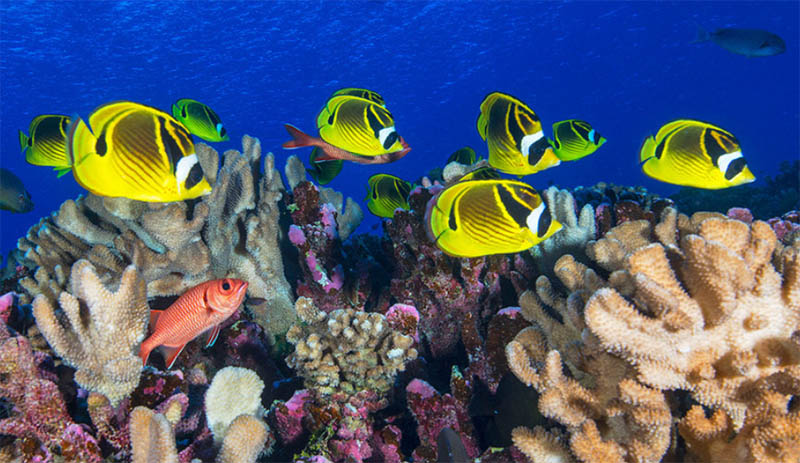 End war on nature and ensure ocean health, UN chief says in message for World Oceans Day