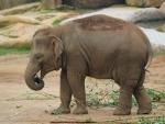 Elephant dies due to suspected electrocution at Sadia Range