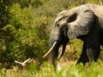 18 elephants killed in lightning strike in Assam