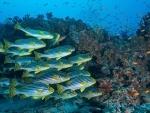 UNESCO 'eDNA' initiative to 'unlock' knowledge for biodiversity protection