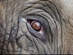 Assam: Elephant found dead in Goalpara