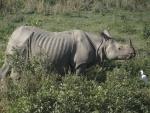 Man killed in rhino attack near Kaziranga National Park
