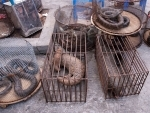 Pakistan witnessing sharp decline in numbers of pangolin due to their illegal trade in China: WWF