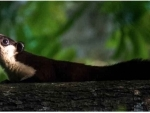 The case of northeast India's Malayan giant squirrels