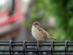 Bird Flu scare: Four parks in Delhi closed for public