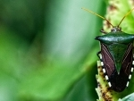 Biodiversity commitment builds hope for 'living in harmony with nature'