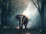 Female elephant electrocuted in Assam's Kamrup (Rural) district