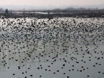 Action plan laid out for the conservation of wetlands in Kashmir