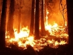 Odisha: Ten days on, Simlipal forest fire continues to rage
