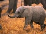 Jharkhand: Baby elephant found dead inside Palamu Tiger Reserve