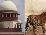 Supreme Court closes case against Maharashtra govt officials over killing of tigress Avni
