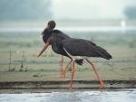 Himachal Pradesh: Bird Flu outbreak at Pong Dam appears contain