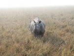 One-horned rhino census stopped temporarily in Nepal as tiger kills mahout
