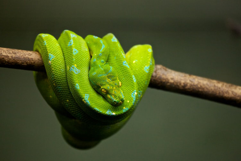 Two pythons rescued in Guwahati and Nagaon