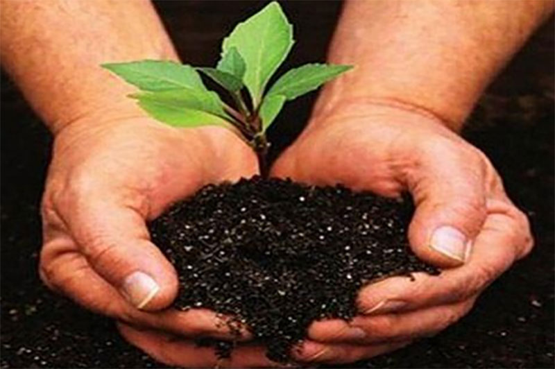 Forest dept to make J&K's green lungs polythene free