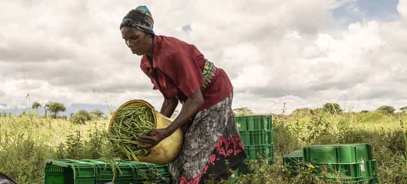 Conflict, climate change, COVID, forces more people into hunger
