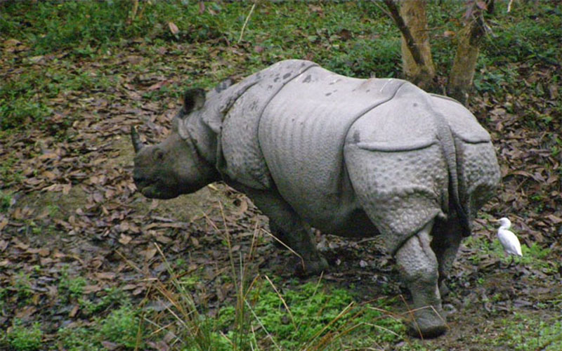 Rhino population thriving in Assam's Orang National Park thanks to global and local partnerships