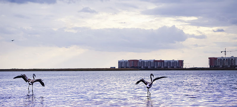 Pink flamingos return to Kazakhstan's capital in time for World Migratory Bird Day