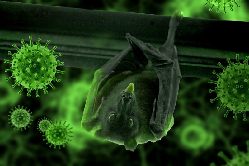 Chinese researchers say they found new batchof coronavirus in bats