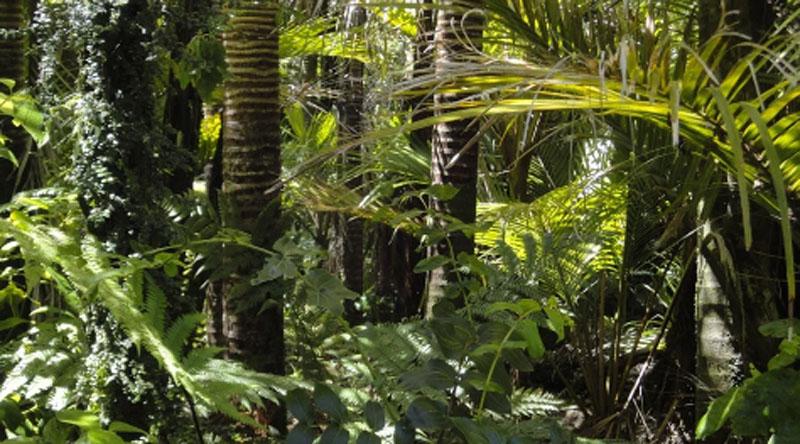 Deforestation in Brazil's Amazon in Jan-Jun highest in five years