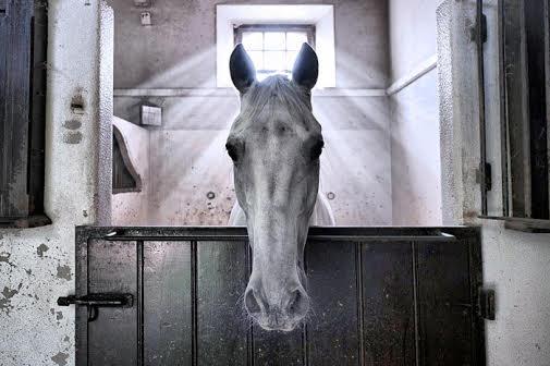 Angel horse image wins FEI Solidarity Photo Grand Prix
