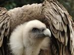 Vulture is a patient bird