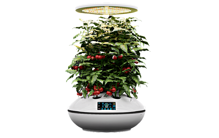 Technology assisted hydroponics to grow plants in urban homes