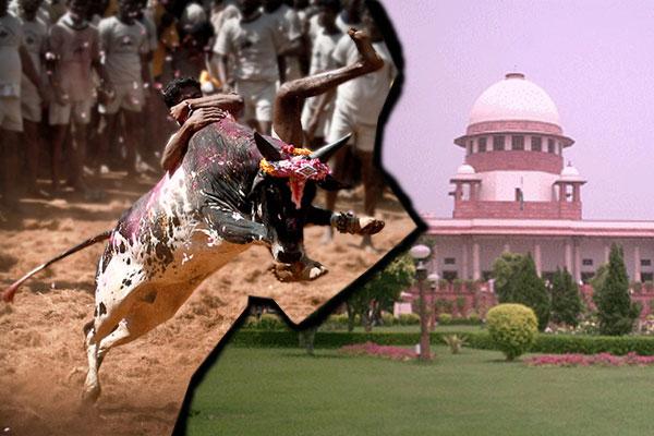 Jallikattu row: TN people urge SC to pass verdict on ban after 'proper analysis'