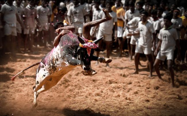 19-year-old spectator killed during Jalikattu event in Tamil Nadu